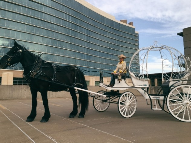 Lazy Magnolia Carriage Rides in Downtown Branson